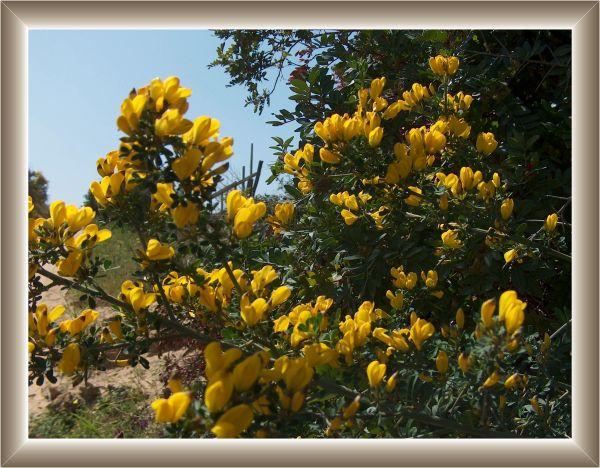 Gli arbusti for Piante da sottobosco